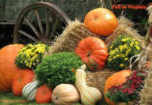 0Pumpkin_Pumpkins_2650920820011936936zFyYFA_fs